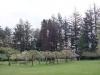 meadowtrees.jpg