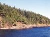 treeshoreline.jpg